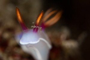 nudi and skeleton shrimps by Paolo Isgro